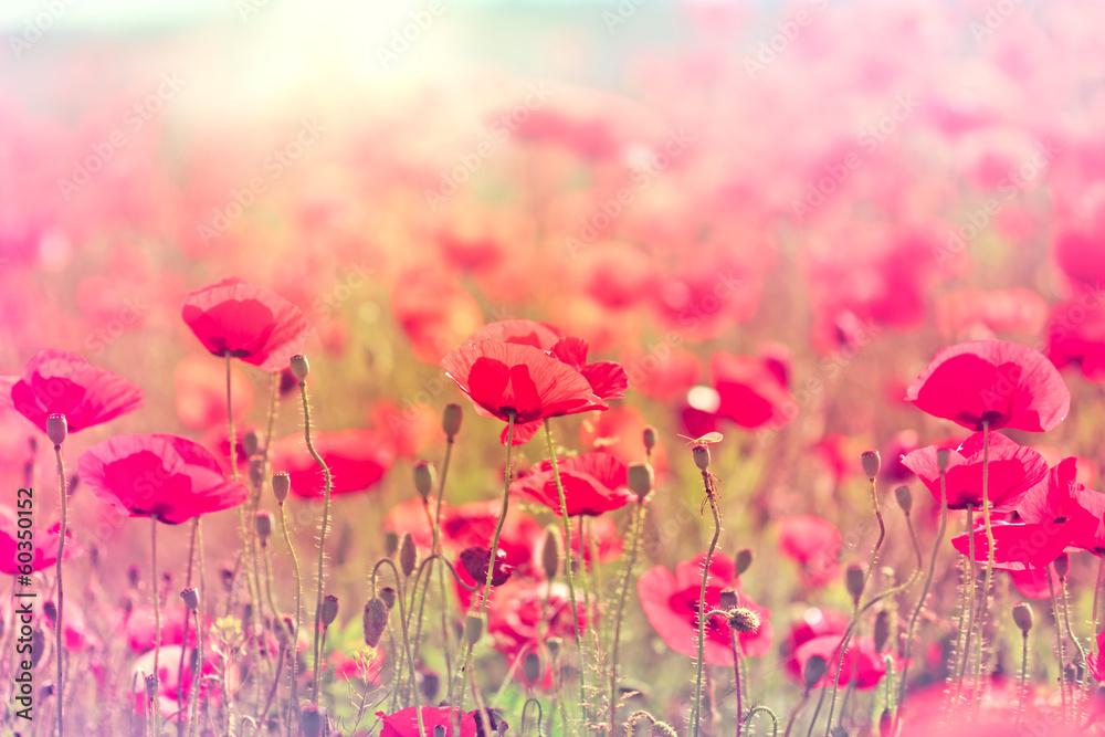 Fototapeta Wild poppy flower