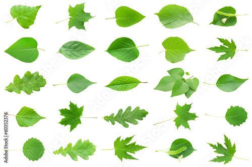 Obraz Green Leaves - fototapety do salonu