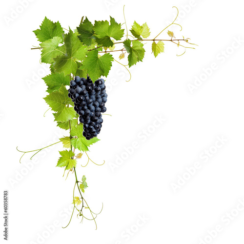 Collage of vine leaves and blue grapes Fototapete