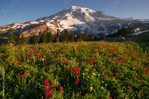 Valokuva  Cascade Range Rainier National Park Mountain Paradise Meadow