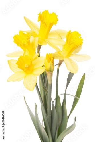 Papiers peints Narcisse Narzissen isoliert