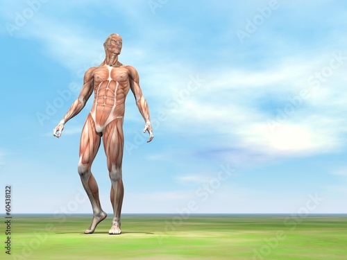 Fotomural Male musculature walking - 3D render