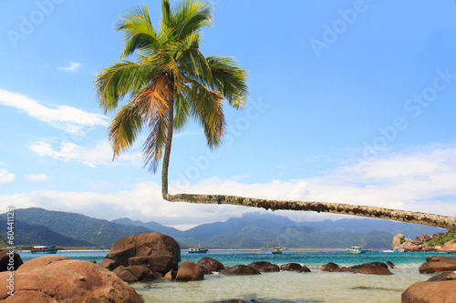 Fotografie, Obraz  Palm tree on beach Aventueiro, Ilha Grande, Brazil