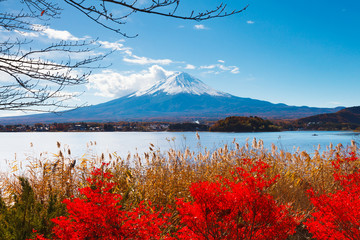 FototapetaMt. Fuji in autumn