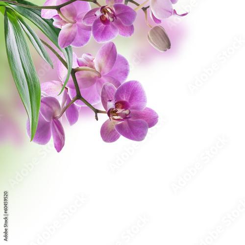 tle-kwiatow-tropikalnych-storczykow