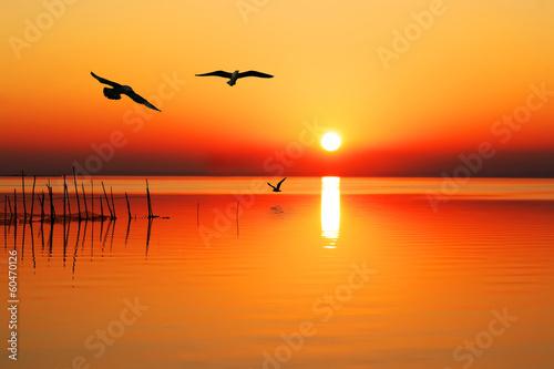 Keuken foto achterwand Oranje eclat sobrevolando el lago naranja