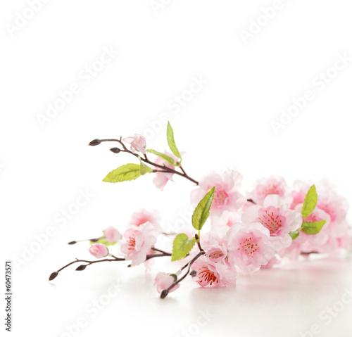 Foto op Aluminium Kersenbloesem Cherry blossoms