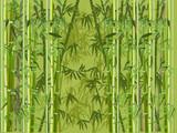 Fototapeta Sypialnia - lush green color bamboo forest