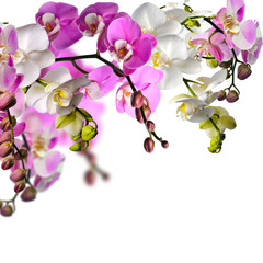 Panel Szklany Do Spa Wellness: Orchideen