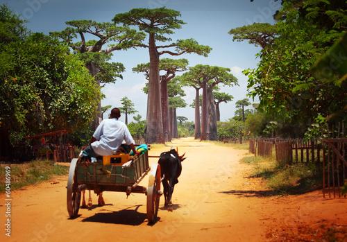 Recess Fitting Baobab Cart