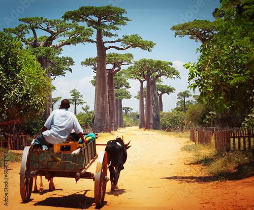 Poster Baobab Cart