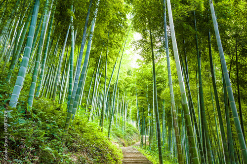 Poster Bamboe Bamboo forest and walkway
