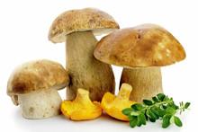 Porcini And Chanterell Mushrooms