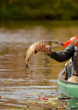 Fishing In A Canoe For A Pike ...