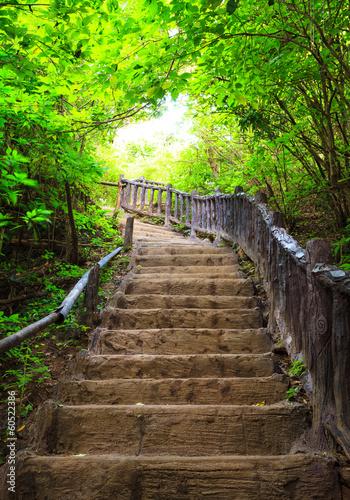 Foto auf Acrylglas Bestsellers Stairway to forest