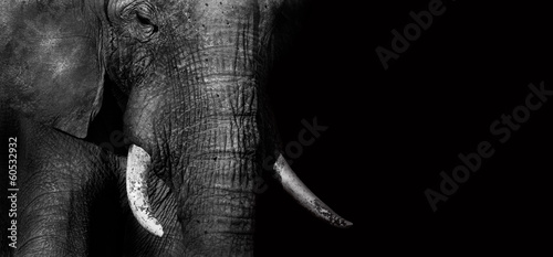 Foto op Canvas Zwart Elephant (creative edit)
