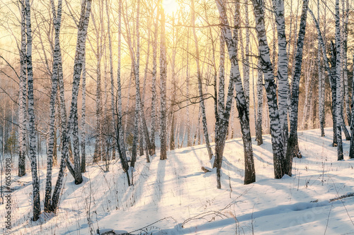 Cadres-photo bureau Bosquet de bouleaux Sunset in winter forest