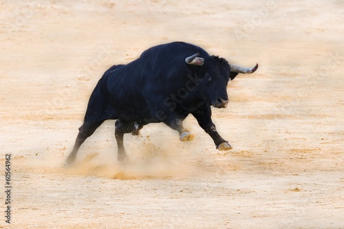 bull ramming in the sand