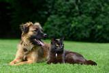 Kot i pies leżą na trawie