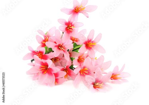 Foto op Canvas Bloemen vrouw Close up of pink flowers.