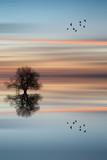 Sylwetka drzewa na spokojny ocean wody krajobraz o zachodzie słońca - 60575146