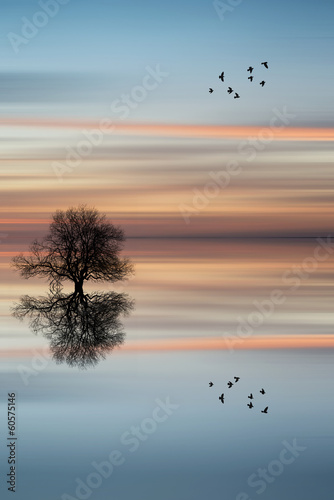 Door stickers Dark grey Silhouette of tree on calm ocean water landscape at sunset