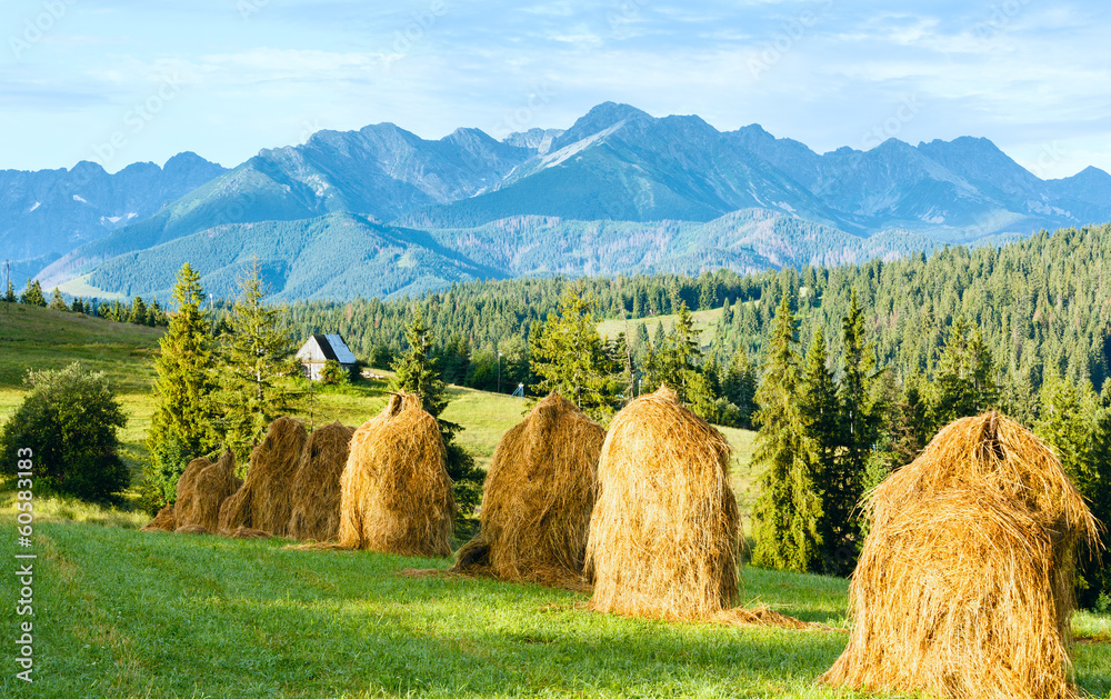 Fototapety, obrazy: Summer mountain country view