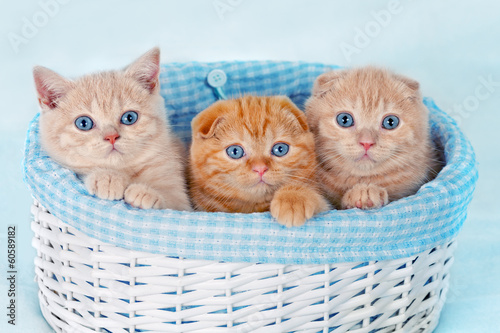 Cute kittens sitting in a basket