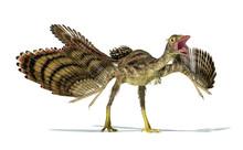 Photorealistic Representation Of An Archaeopteryx Dinosaur.