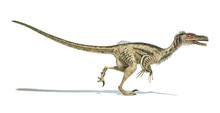 Velociraptor Dinosaur, Scienti...
