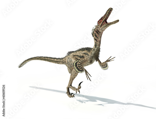 Photo  Velociraptor dinosaur, scientifically correct, with feathers.