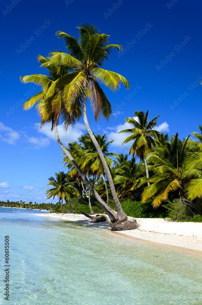 Fototapeta Dominicana beach with palms