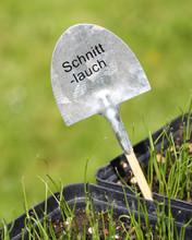 Kräuter Selber Aussäen - Sch...