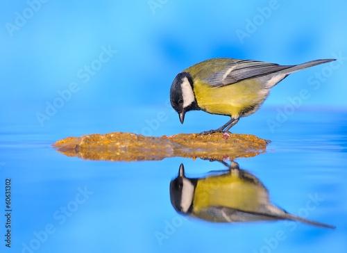 Reflejado en el estanque.