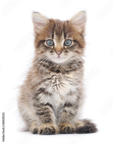 Kitten on a white background #60638523