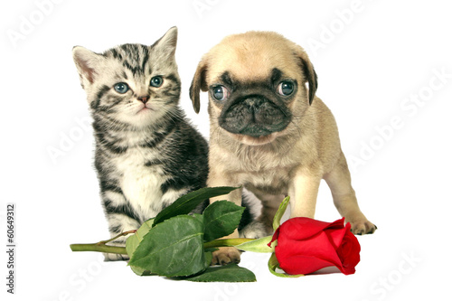 Puppy and kitten for present