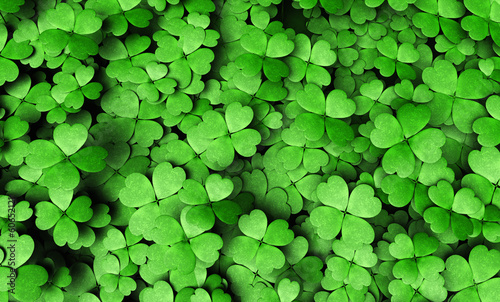 Expanse of four-leaf clovers Fotobehang
