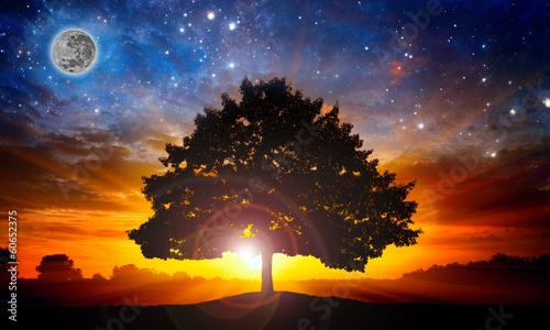 Photo  Space tree