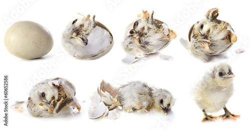 hatching Canvas-taulu