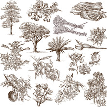 Trees, Plants And Flowers  Around The World - Drawings On White