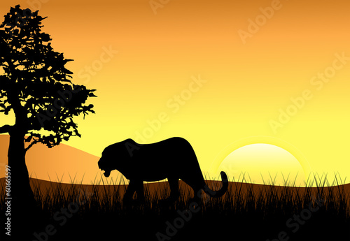 Fototapety, obrazy: Sunset with Female Stalking Lion