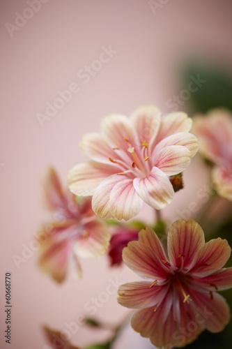 Fototapeta flowers obraz na płótnie
