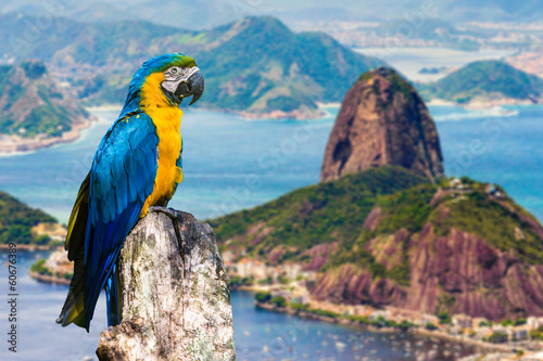 Blue and Yellow Macaw in Rio de Janeiro, Brazil Poster