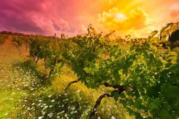 Obraz na Szkle Do restauracji Vineyard at Sunset