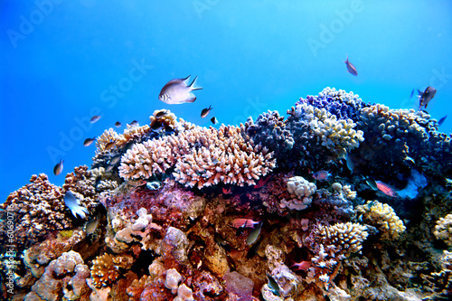 Staande foto Koraalriffen Group of coral fish water.