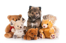 Little Puppy Sitting Between Soft Toys Isolated On White