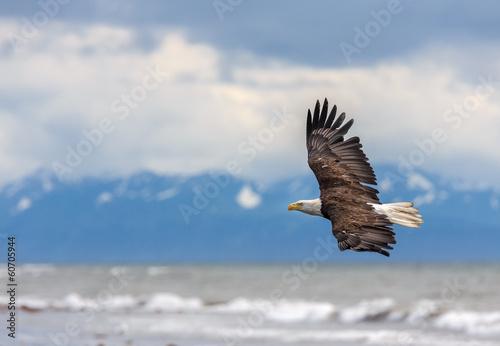 In de dag Eagle American Bald Eagle at Alaska