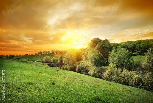 Canvas Prints Honey Forest on the hill