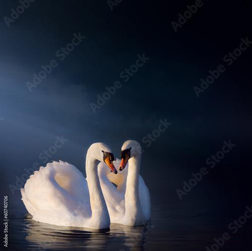 Obraz na płótnie art Romantic swan couple