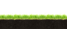 Cross-section Of Soil And Gras...